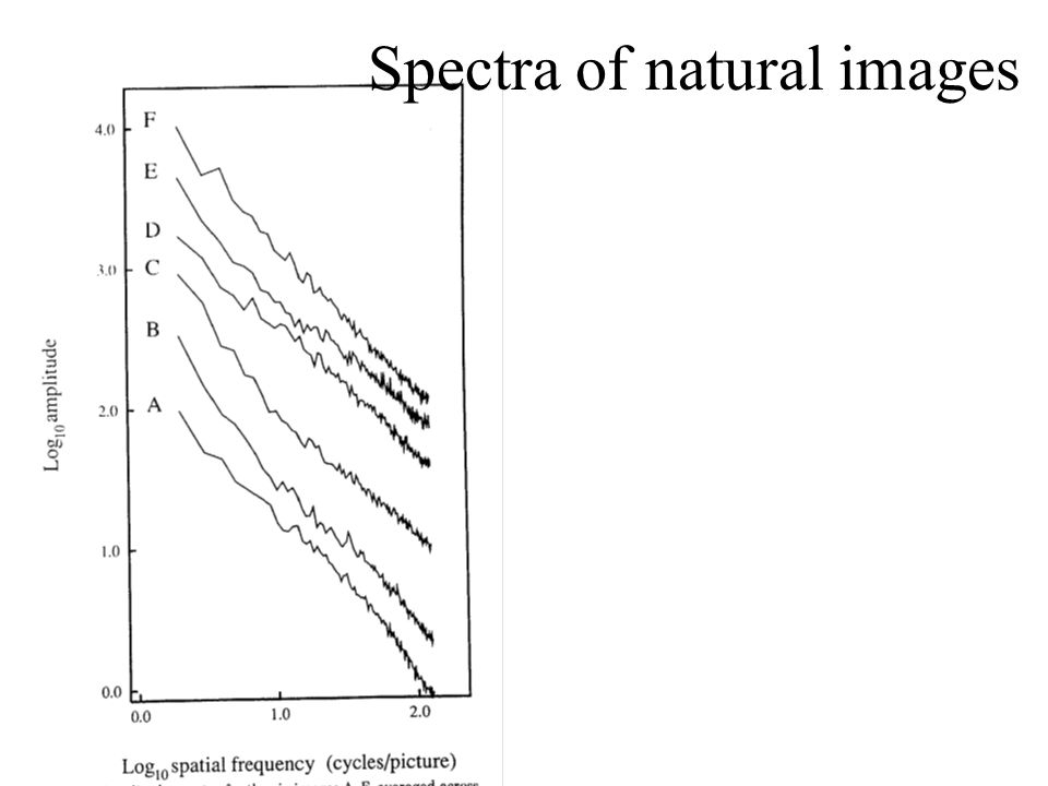 Spectra of natural images