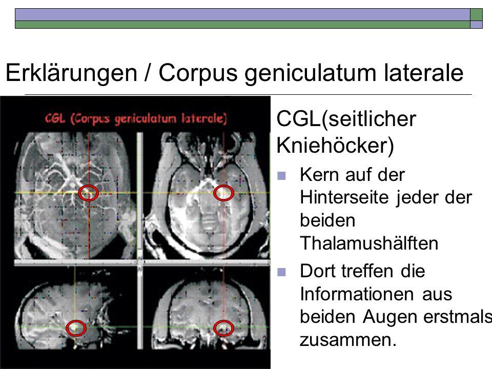 Erklärungen / Corpus geniculatum laterale