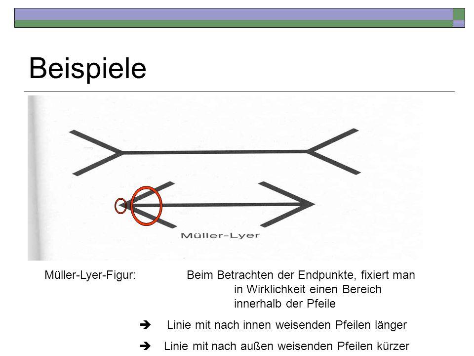 Beispiele Müller-Lyer-Figur: Beim Betrachten der Endpunkte, fixiert man in Wirklichkeit einen Bereich innerhalb der Pfeile.