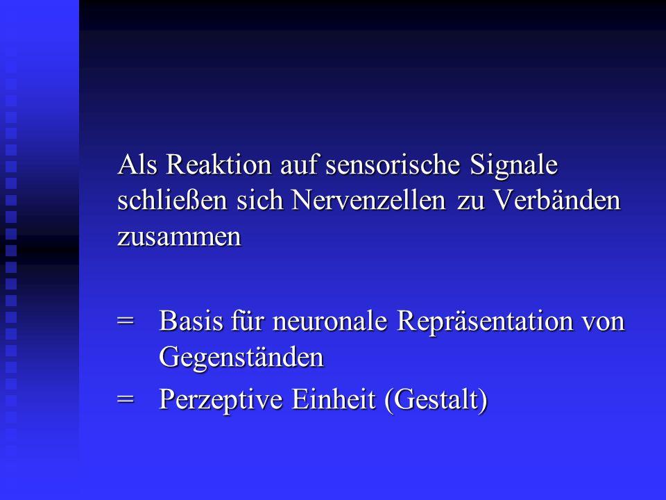 Als Reaktion auf sensorische Signale schließen sich Nervenzellen zu Verbänden zusammen
