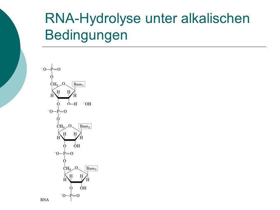 RNA-Hydrolyse unter alkalischen Bedingungen