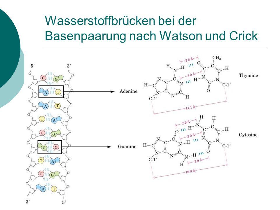 Wasserstoffbrücken bei der Basenpaarung nach Watson und Crick