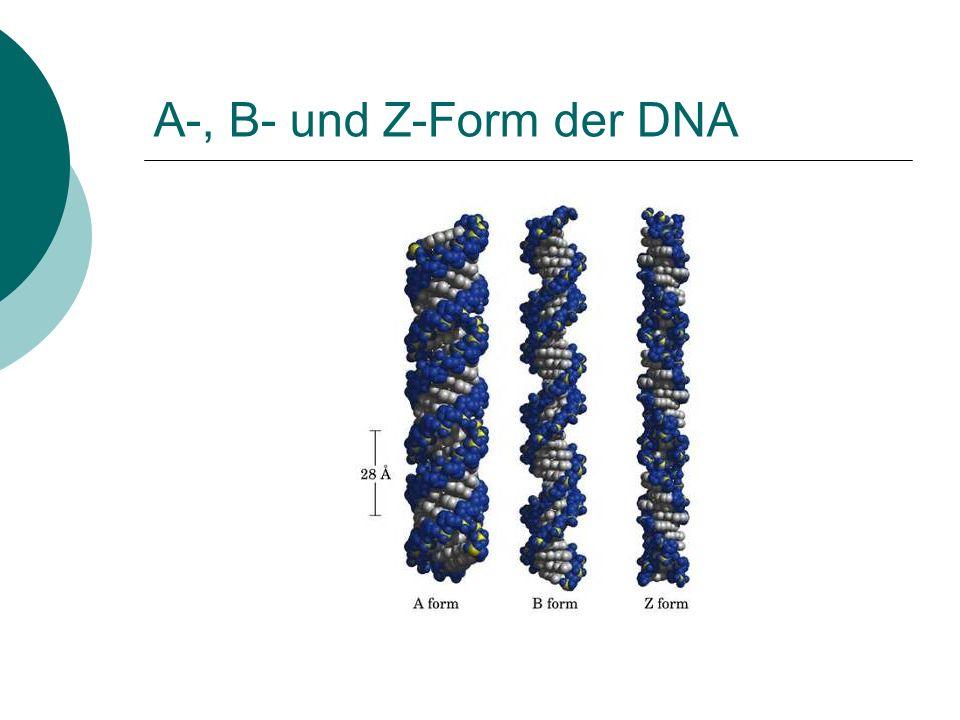 A-, B- und Z-Form der DNA