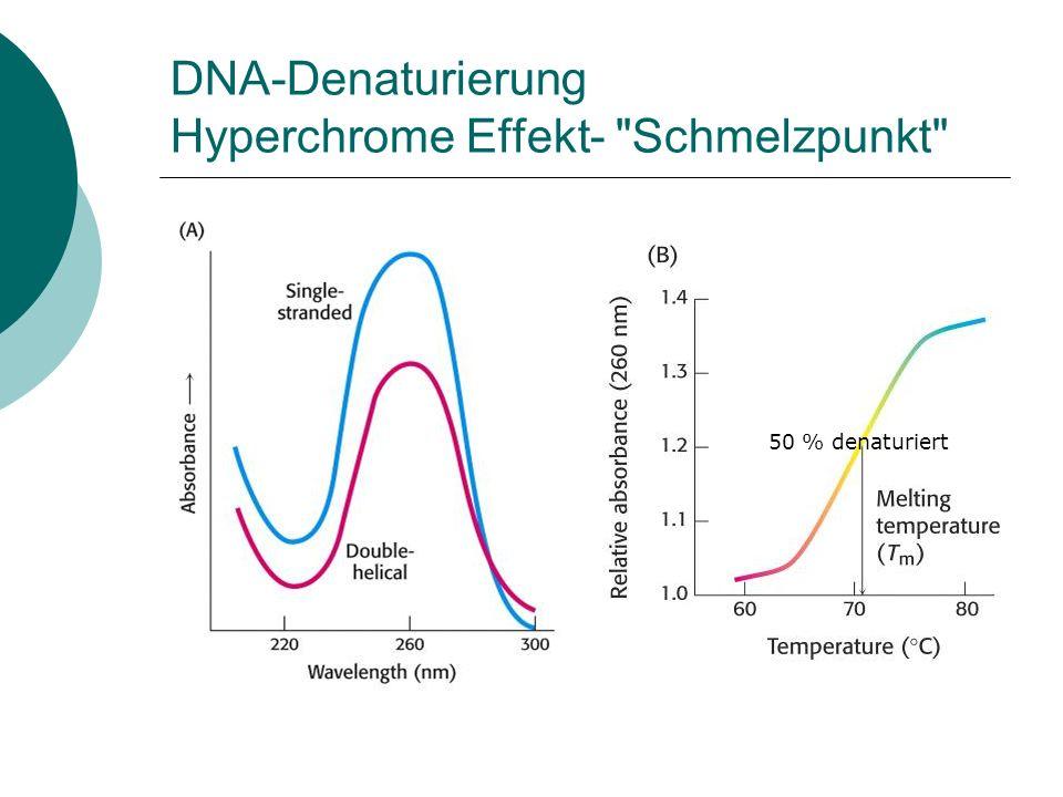 DNA-Denaturierung Hyperchrome Effekt- Schmelzpunkt