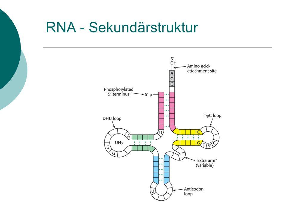 RNA - Sekundärstruktur