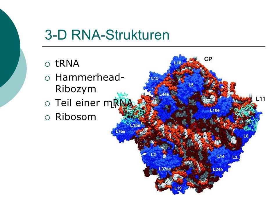 3-D RNA-Strukturen tRNA Hammerhead-Ribozym Teil einer mRNA Ribosom