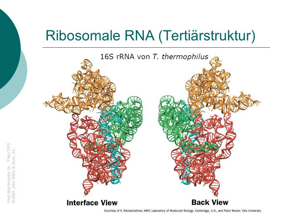 Ribosomale RNA (Tertiärstruktur)