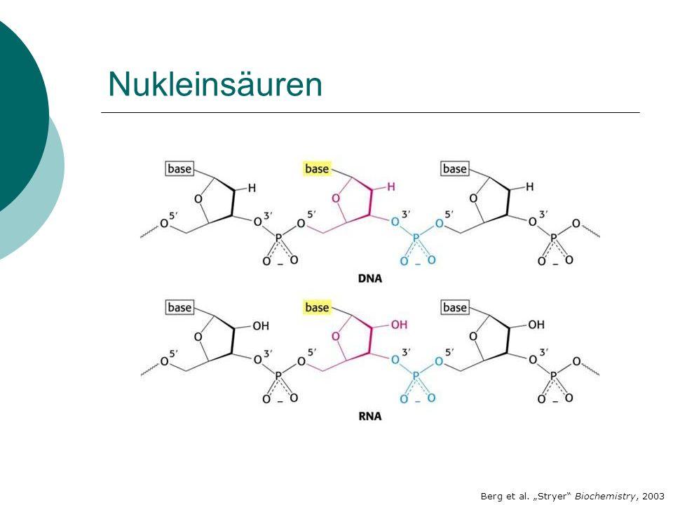 "Nukleinsäuren Berg et al. ""Stryer Biochemistry, 2003"