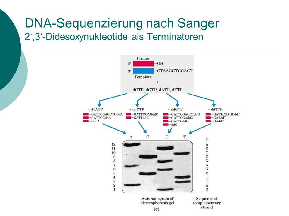 DNA-Sequenzierung nach Sanger 2',3'-Didesoxynukleotide als Terminatoren