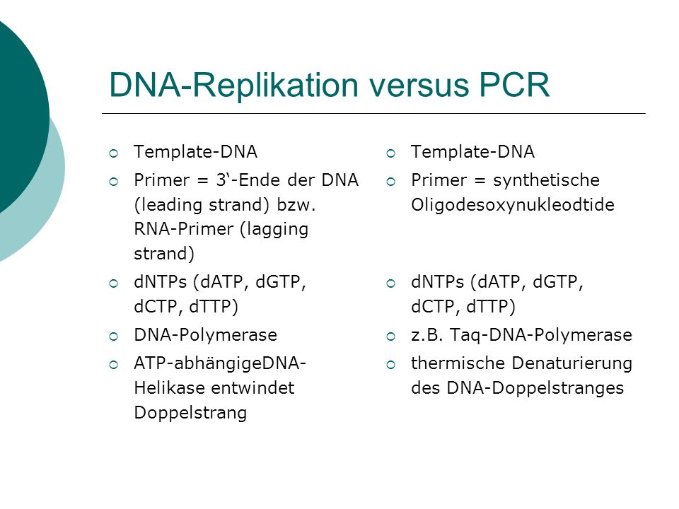 DNA-Replikation versus PCR
