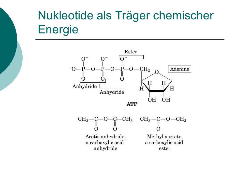 Nukleotide als Träger chemischer Energie