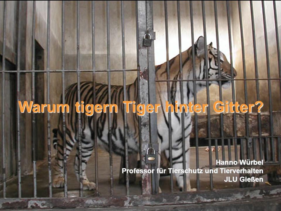Warum tigern Tiger hinter Gitter
