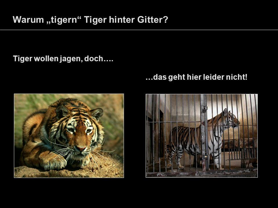 """Warum """"tigern Tiger hinter Gitter"""