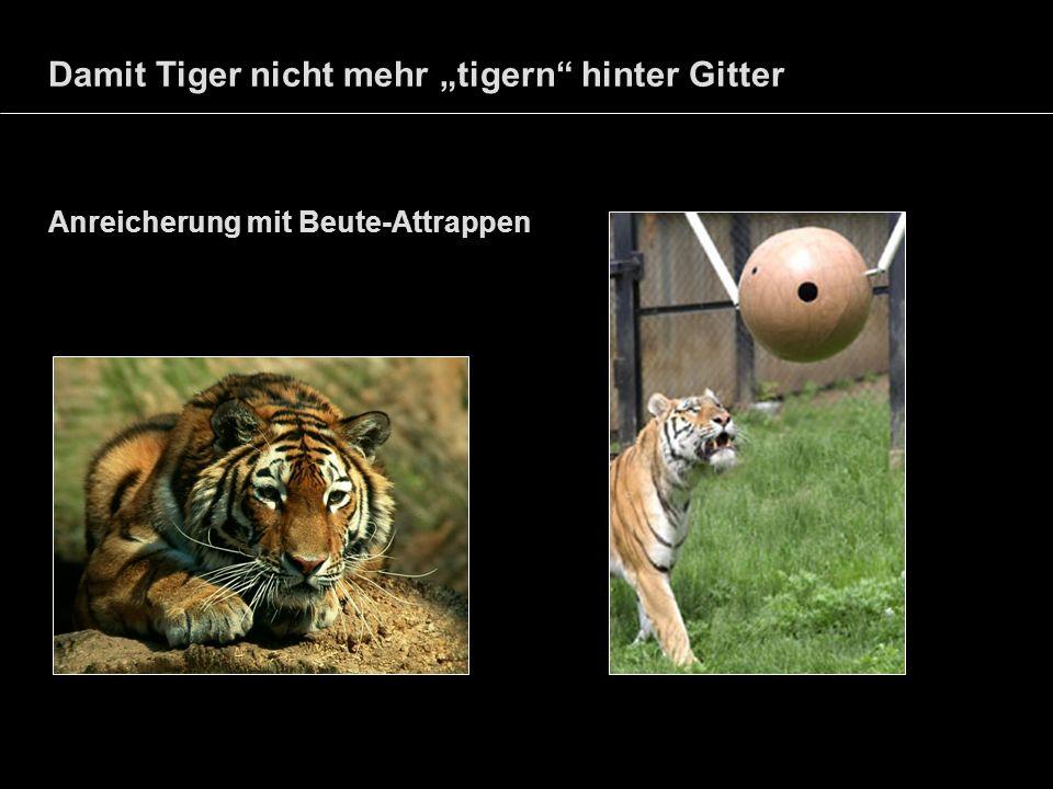 """Damit Tiger nicht mehr """"tigern hinter Gitter"""