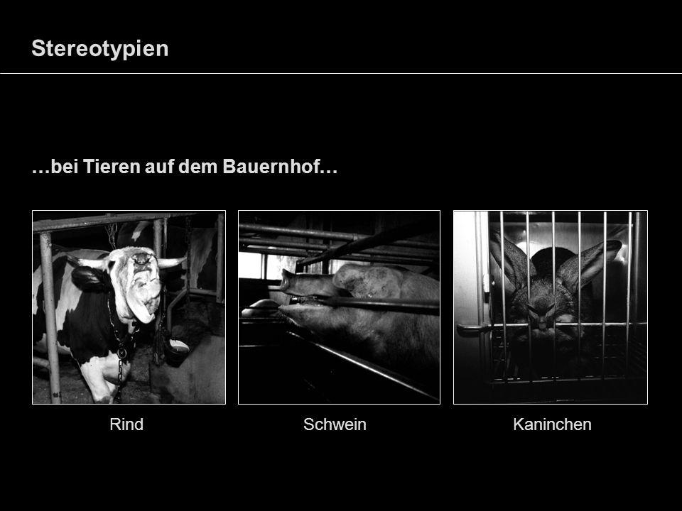 Stereotypien…bei Tieren auf dem Bauernhof… Rind Schwein Kaninchen.
