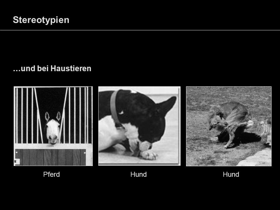 Stereotypien …und bei Haustieren Pferd Hund Hund