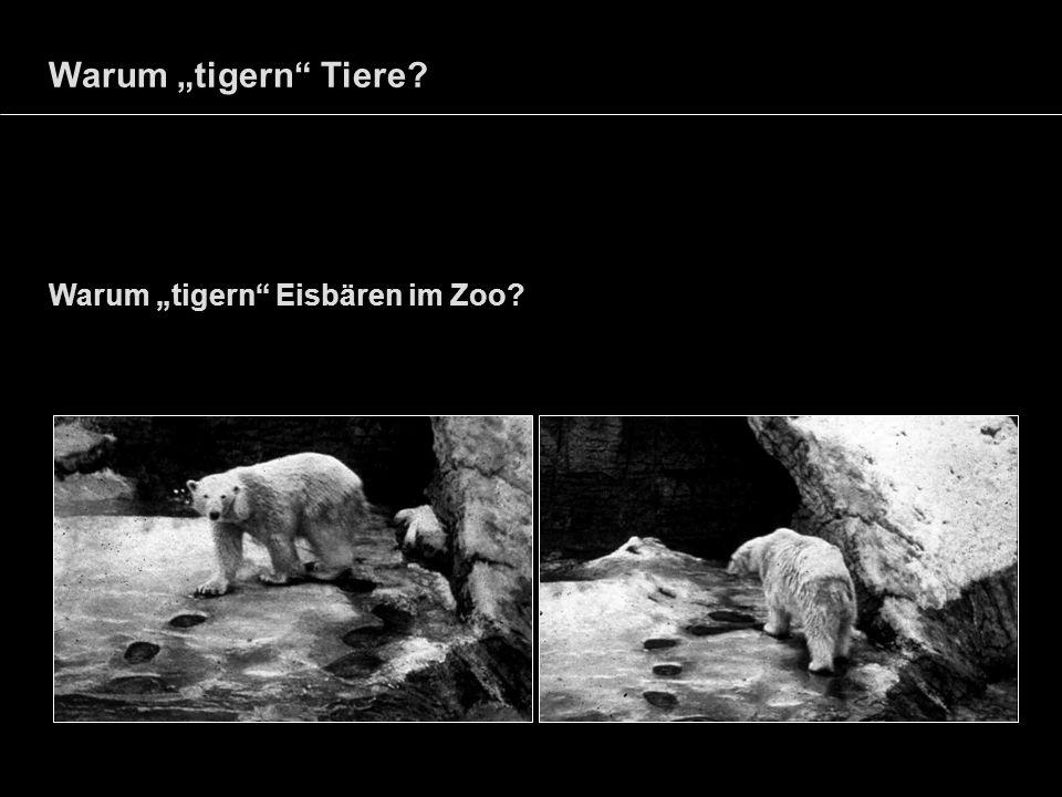 """Warum """"tigern Tiere Warum """"tigern Eisbären im Zoo"""