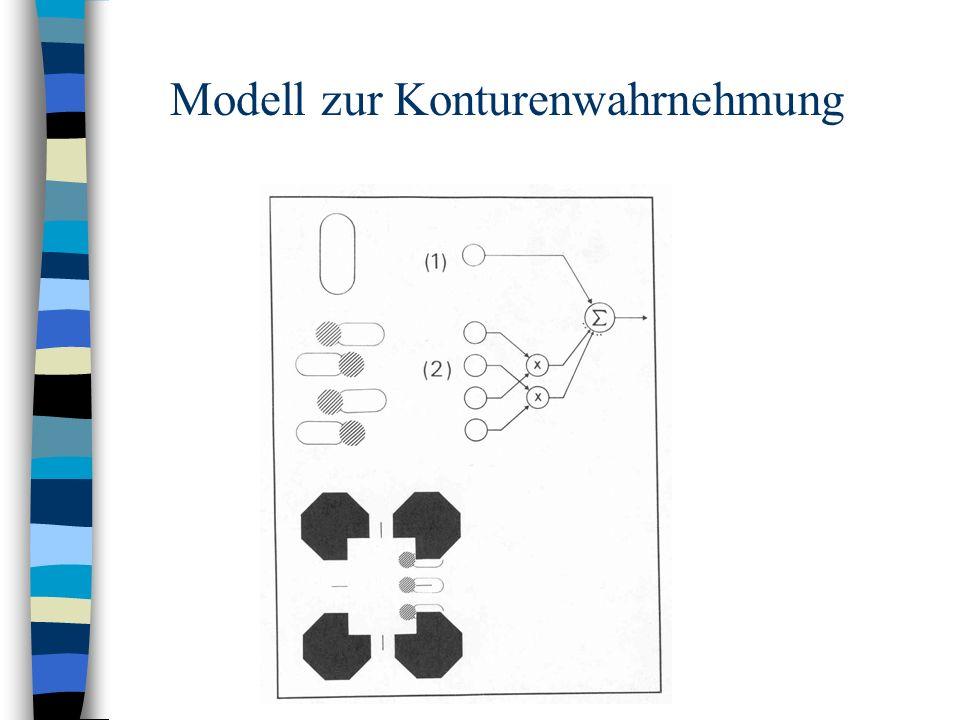 Modell zur Konturenwahrnehmung