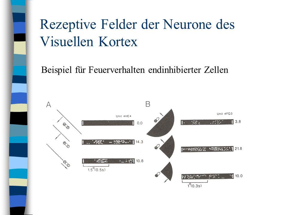 Rezeptive Felder der Neurone des Visuellen Kortex