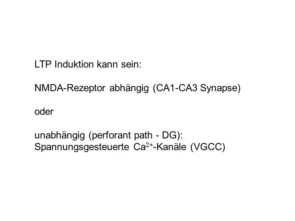 LTP Induktion kann sein: