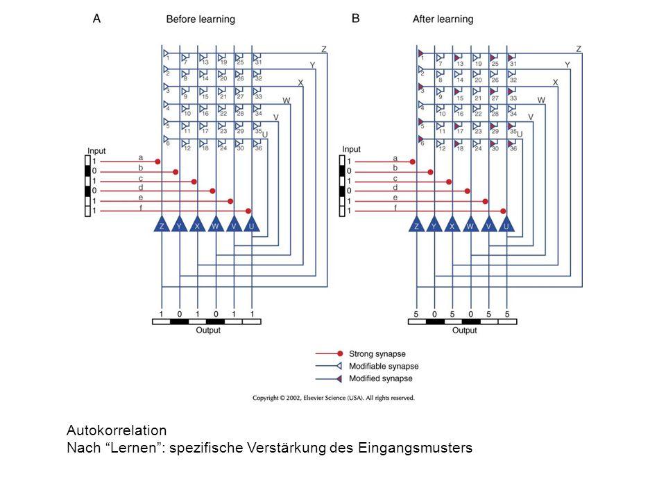Autokorrelation Nach Lernen : spezifische Verstärkung des Eingangsmusters