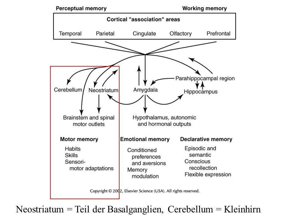 Neostriatum = Teil der Basalganglien, Cerebellum = Kleinhirn