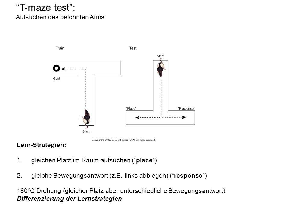 T-maze test : Aufsuchen des belohnten Arms Lern-Strategien: