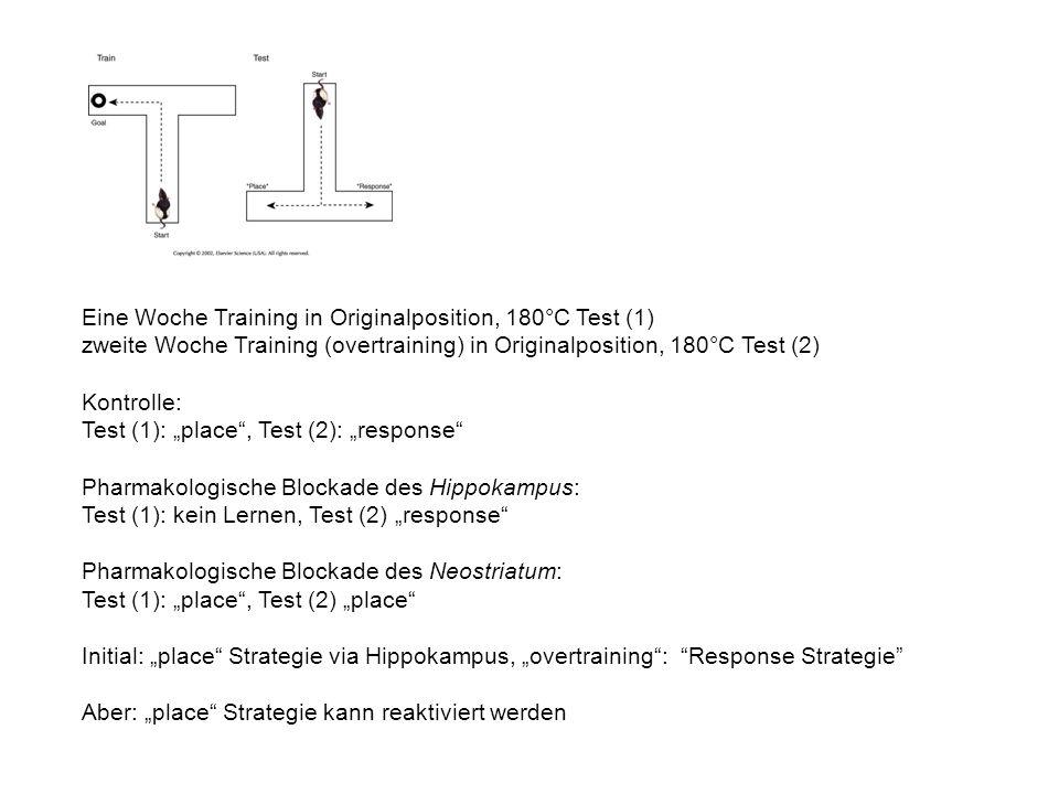 Eine Woche Training in Originalposition, 180°C Test (1)