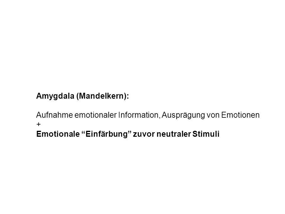 Amygdala (Mandelkern):