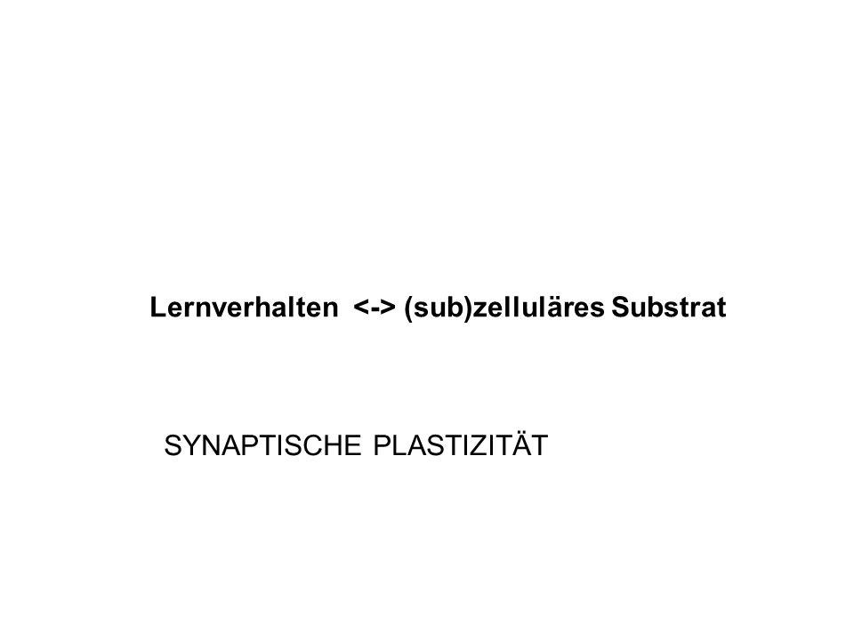 Lernverhalten <-> (sub)zelluläres Substrat