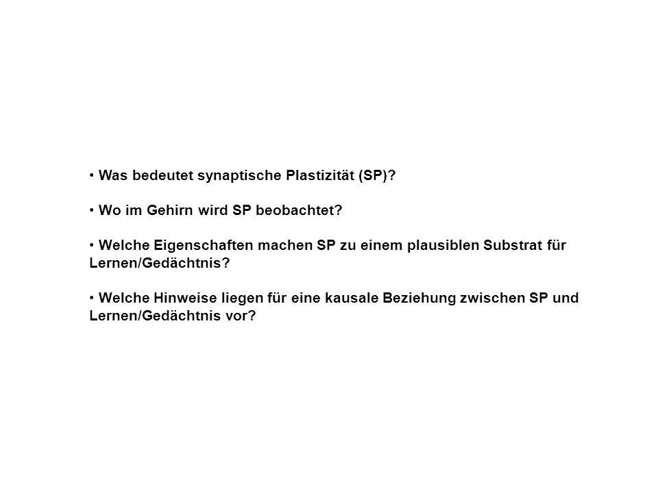 Was bedeutet synaptische Plastizität (SP)