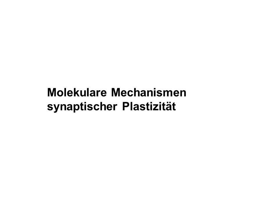 Molekulare Mechanismen