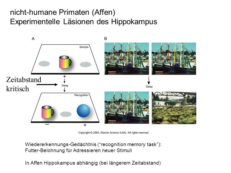 nicht-humane Primaten (Affen) Experimentelle Läsionen des Hippokampus