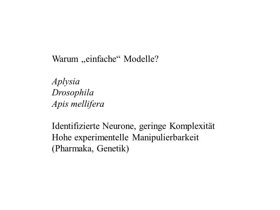 """Warum """"einfache Modelle"""