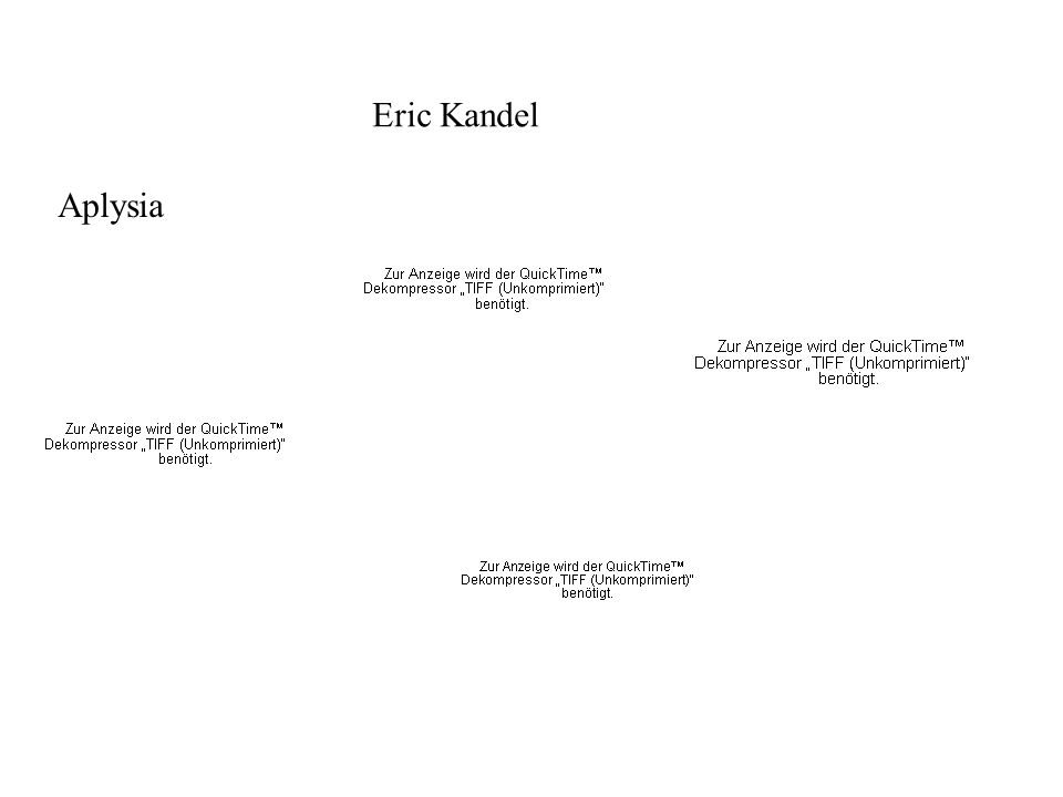 Eric Kandel Aplysia