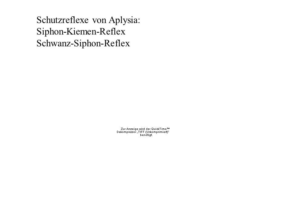 Schutzreflexe von Aplysia: