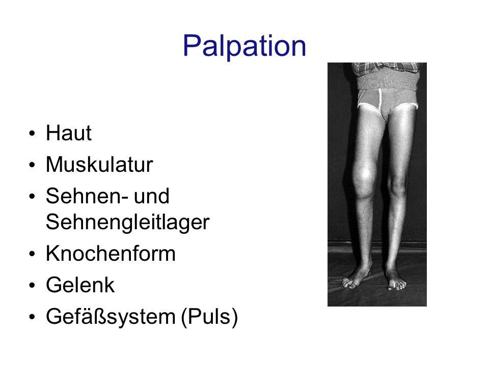 Palpation Haut Muskulatur Sehnen- und Sehnengleitlager Knochenform
