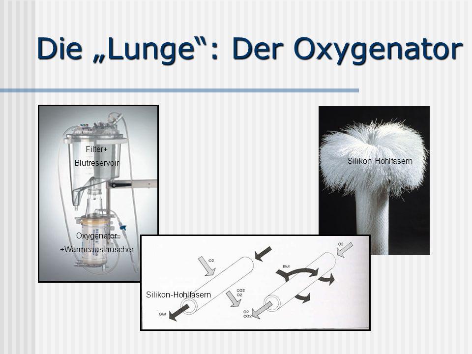 """Die """"Lunge : Der Oxygenator"""
