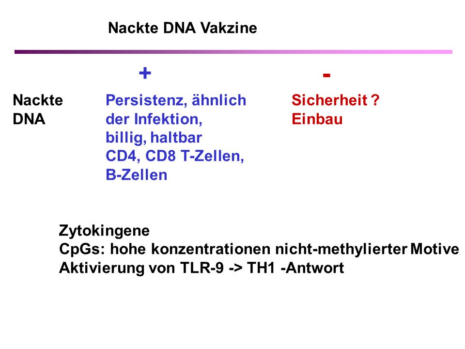 - + Nackte DNA Vakzine Nackte Persistenz, ähnlich Sicherheit