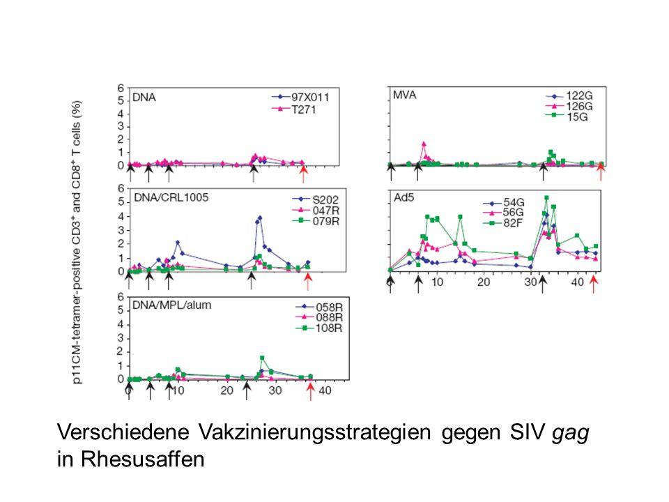 Verschiedene Vakzinierungsstrategien gegen SIV gag