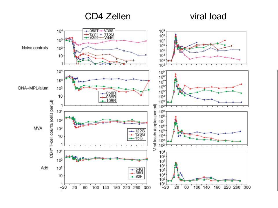 CD4 Zellen viral load