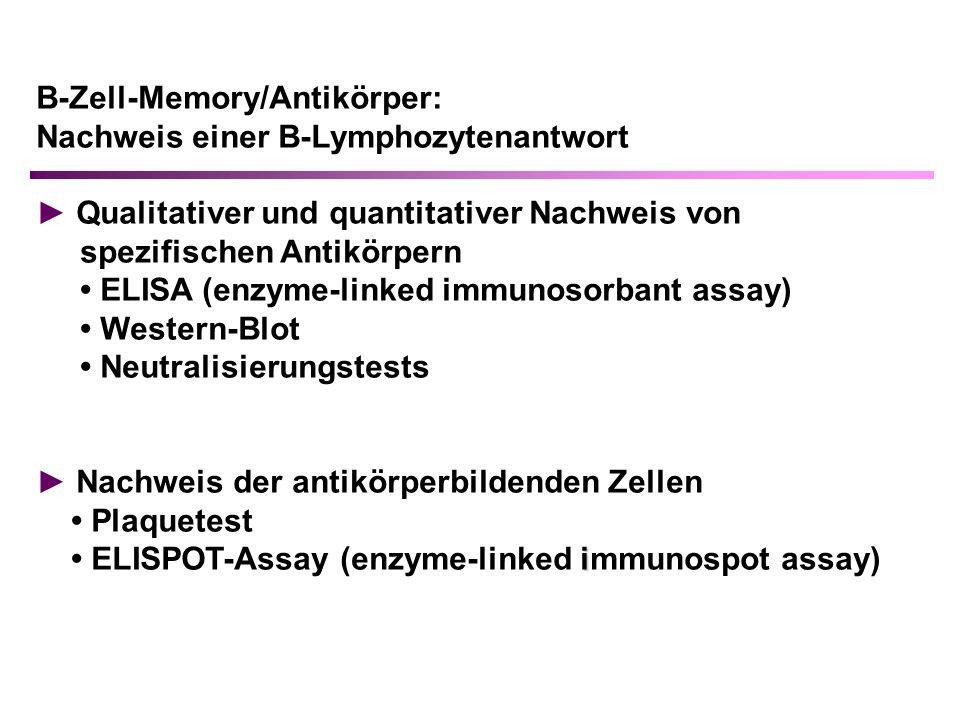 B-Zell-Memory/Antikörper: