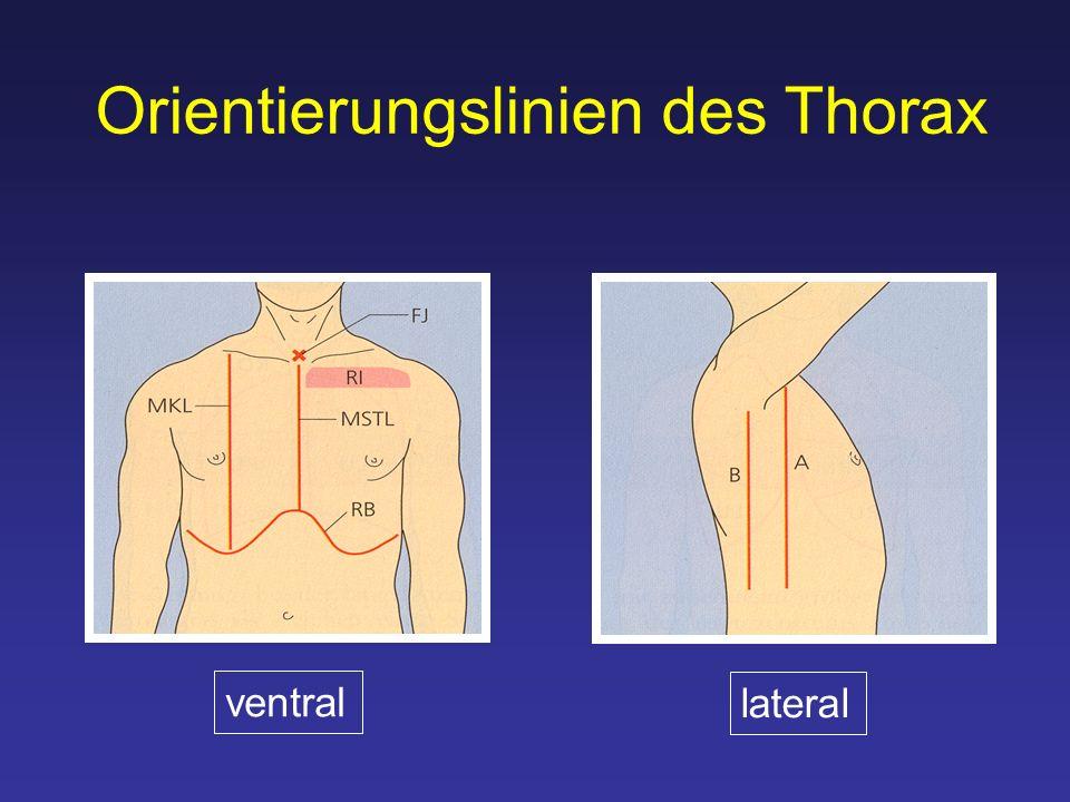 Orientierungslinien des Thorax