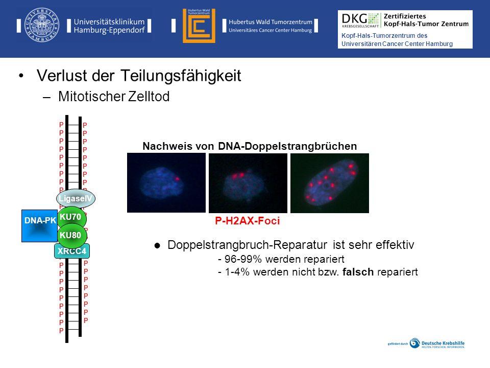 Nachweis von DNA-Doppelstrangbrüchen