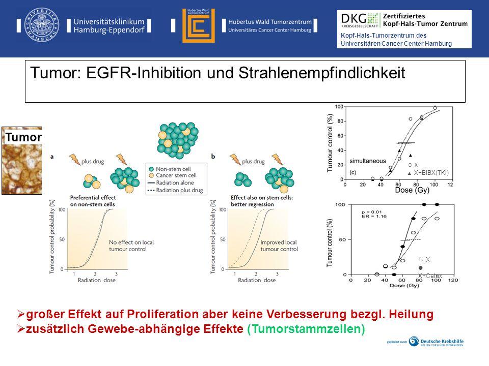 Tumor: EGFR-Inhibition und Strahlenempfindlichkeit