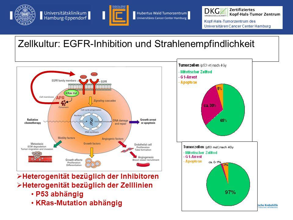 Zellkultur: EGFR-Inhibition und Strahlenempfindlichkeit