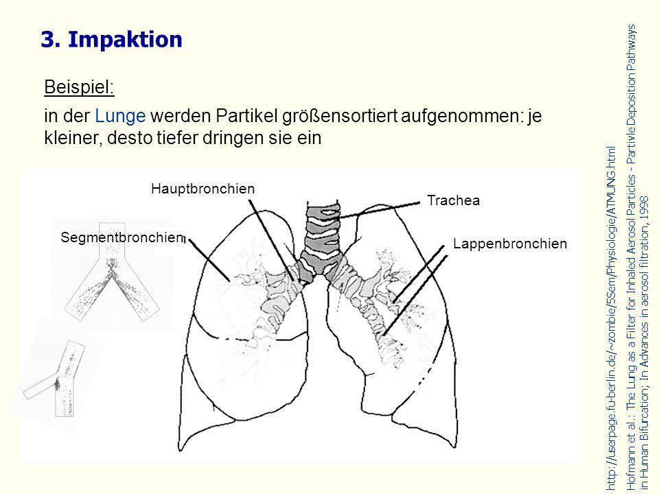3. Impaktion Beispiel: in der Lunge werden Partikel größensortiert aufgenommen: je kleiner, desto tiefer dringen sie ein.