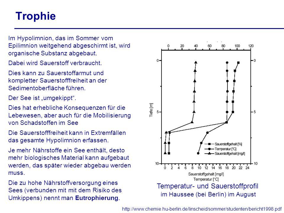 Trophie Temperatur- und Sauerstoffprofil