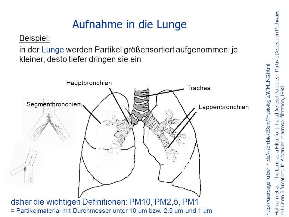 Aufnahme in die Lunge Beispiel: