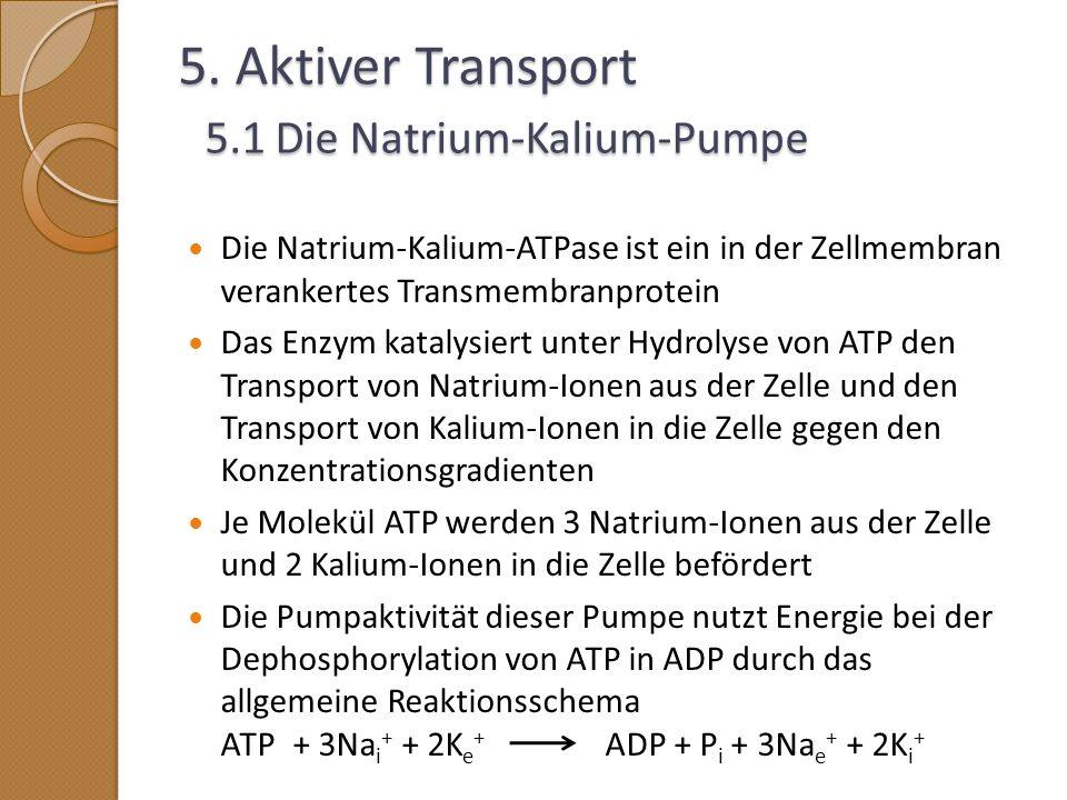 5. Aktiver Transport 5.1 Die Natrium-Kalium-Pumpe
